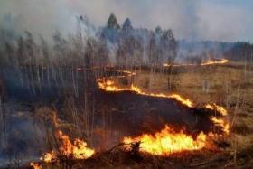 意大利学生烧烤引发山火 被罚2亿